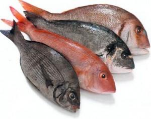 science de poissons
