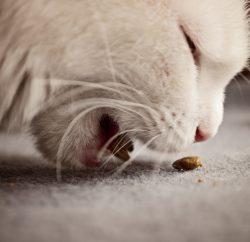 Faut-il nourrir son animal sans céréales ?